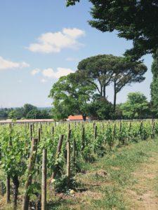 Vignes château